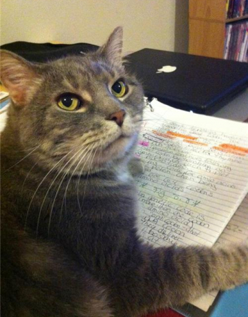 The Literate Kitty Review